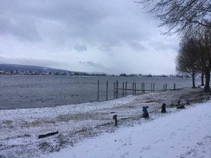 Bodenseeradweg Unterkünfte in Allensbach - Winterlandschaft