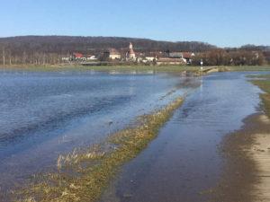 Überschwemmung des Donauradwegs bei Riedlingen-Zell (Flussradweg)