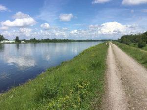 Rheinradweg Kehl am Rhein