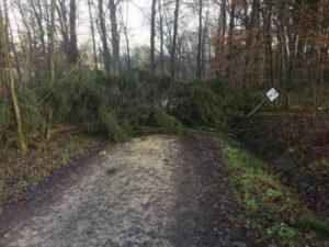 Aichtal Denkendorf Hohenzollern Radweg - umgestürzter Baum
