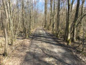 Auenwald zwischen Plattling und Isarmünd - Isarmündung