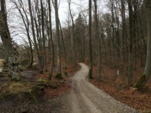 Zwischen Grünwald und München - Naturnahes Isartal - Isarradweg