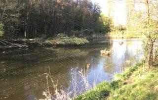 Die Jagst bei Ellwangen - Kocher-Jagst-Radweg