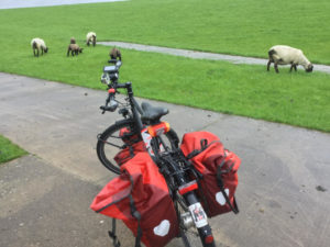 Kleinensiel Großensiel Schafe Fahrrad Weser Weserradweg Nordenham