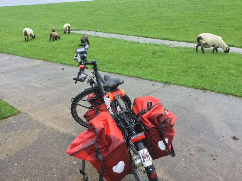 Weserradweg - Schafe - beliebtester deutscher Radweg - Radreise lohnt sich!