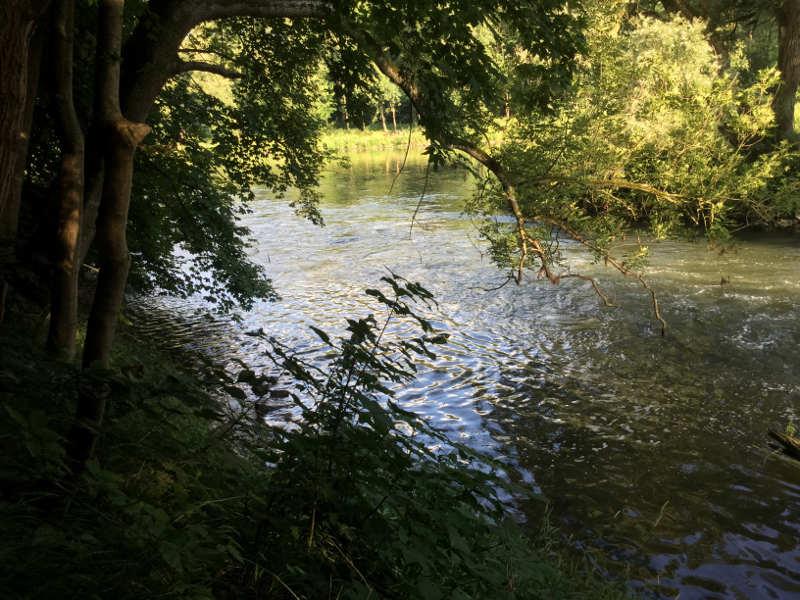 Mündung Brenz in die Donau