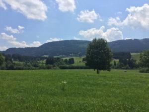 Landschaft zwischen Weitnau und Buchenberg - Allgäu-Radweg