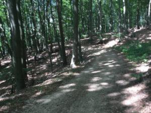 Lauenburg Schnakenbek Geesthacht - Wald - Schotterweg - Elberadweg