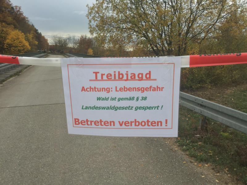 Zwischen Zaisersweiher und Schützingen - Treibjagd!