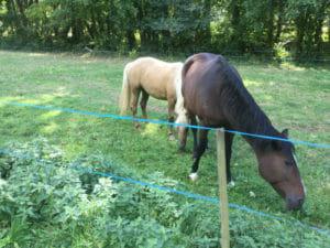 Soultz-le Bains - Pferde - Radfahren im Elsass
