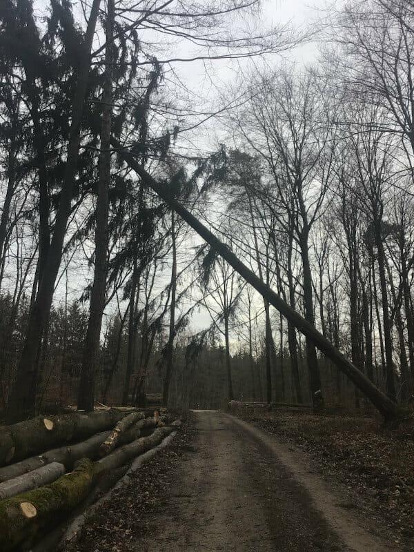 Baum Sturm beim Rudolfsberg - Hohenlohe-Ostalb-Radweg