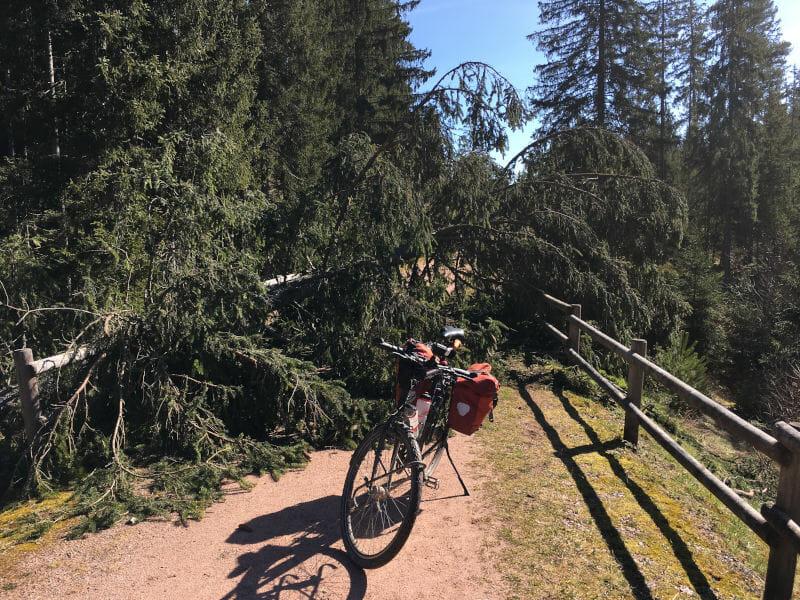 Baum auf Radweg vom Bahnhof Kappel nach Lenzkirch