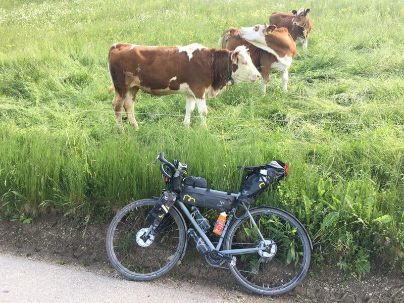 Fischbachau Kühe - Bodensee-Königssee-Radweg