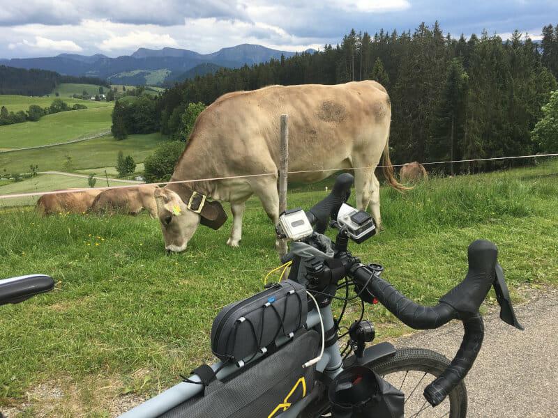 Kuh und Fahrrad in Stiefenhofen am Bodensee-Königssee-Radweg
