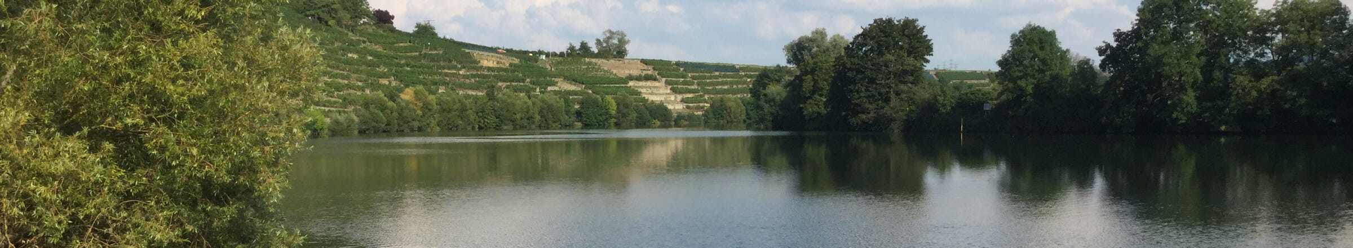 Kirchheim am Neckar - Lauffen - Neckarradweg