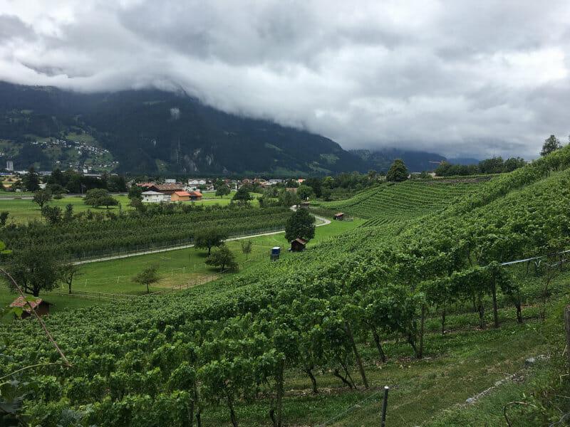 Weinberge bei Malans am Rheinradweg Schweiz