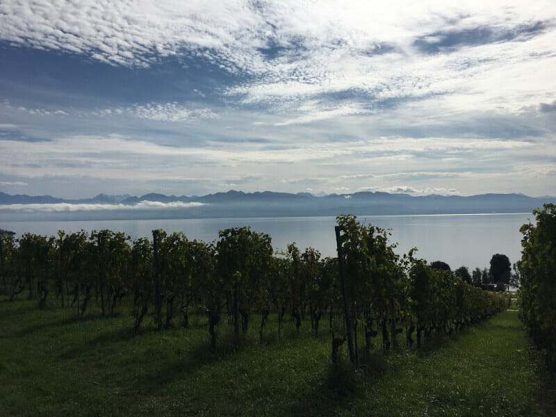 Genfer See - Blick auf die Alpen bei Perroy in der französischen Schweiz