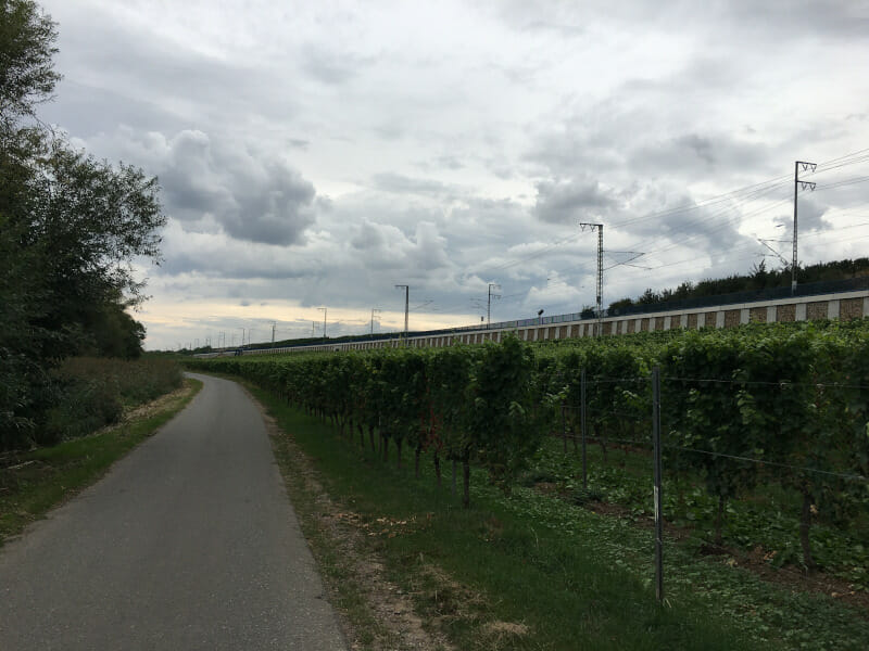 Weinhänge bei Hochheim am Main.