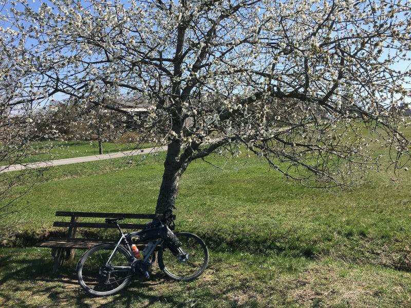 Ittersbach mit Frühlingsbaum und Gravelbike beim Schwarzwald-Radweg