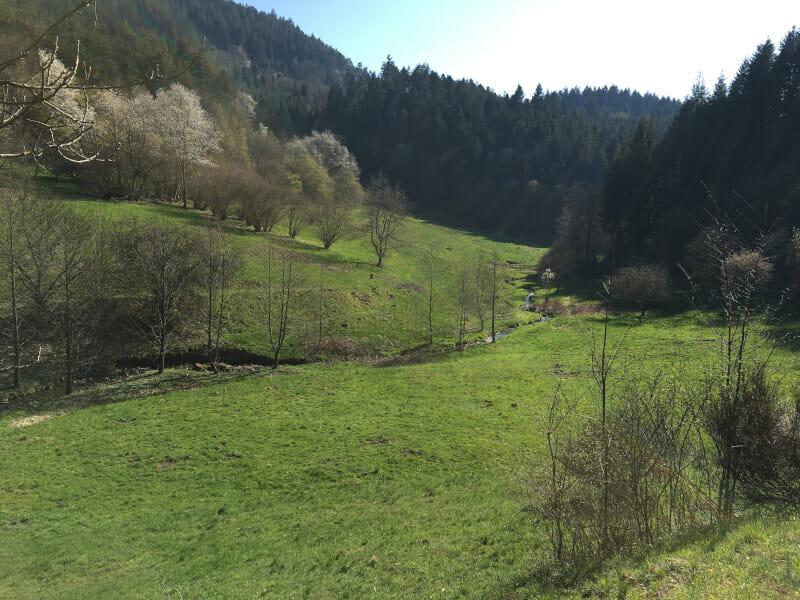 Wunderschönes Tal durch Igelbach - Zwischen Loffenau und Gernsbach