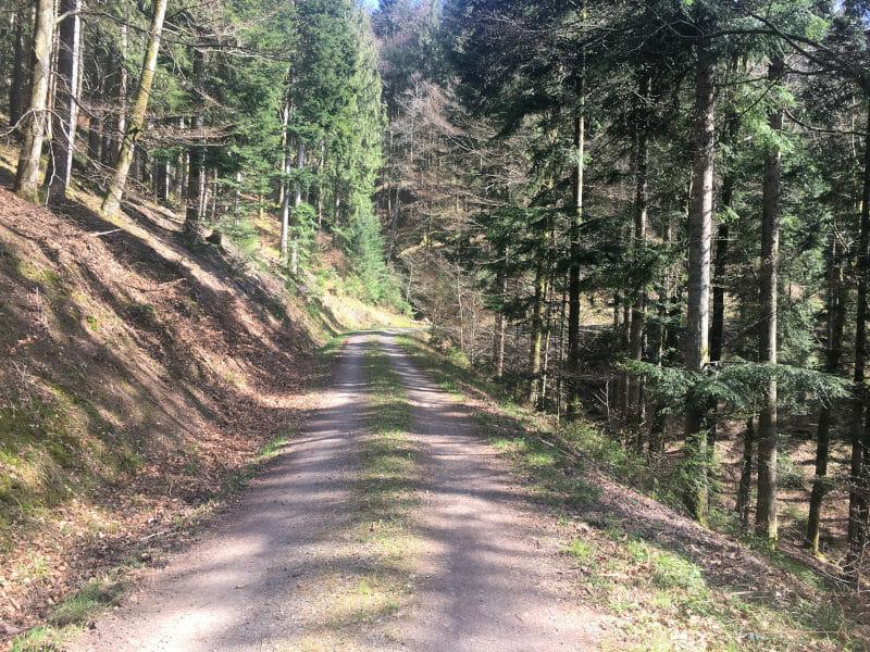 Waldweg zwischen Kniebis und Wolfach am Schwarzwaldradweg