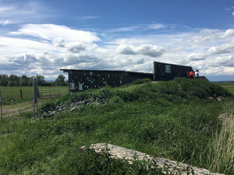 Beobachtungsplattform und Ausguckturm für Vögel und Natur im Bingenheimer Ried.